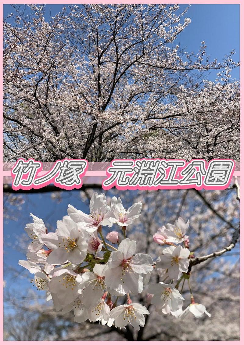 とんでんの塩辛☆桜を観に竹ノ塚の元淵江公園に行って来ました!タイ古式&足つぼ&オイルマッサージ3
