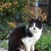 春の猫!の画像