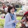 ココケン 第24回「お花見」開催日程決定の画像