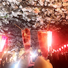 目黒川の夜桜見物の画像