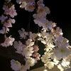 夜桜はミス&ミセスで!本日イベント最終日!!の画像