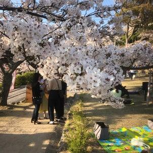 千光寺に花見に行きましたの画像