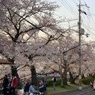 桜並木の記事より