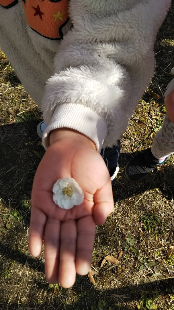 梅のお花見
