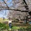春爛漫の桜旅 桜名所を観る「熊谷桜堤」の画像