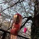 イチゴとお酒と桜だった日♡食べ痩せの記事より
