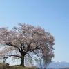 富士と桜。の画像