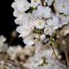 お花ネイル~春ネイルの皆様の画像