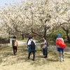 お花見ヨガ「日曜クラス」の画像