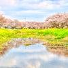 桜の季節が長くて幸せの画像