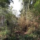 荒れた竹林の手入れの記事より