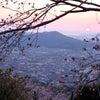 やっぱり日本の桜は良いですね 最初ヶ峰展望所 和歌山県紀の川市竹房の画像