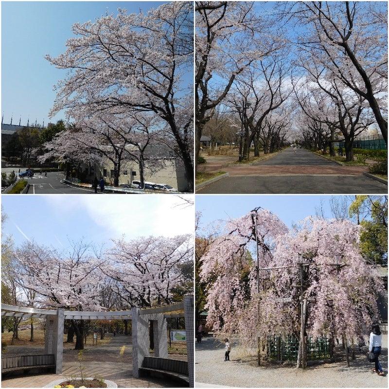 東京競馬場前と府中の森、大國魂神社のしだれ桜