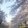 自分だけの花の咲かせ方〜無限の可能性を引き出すには〜の画像
