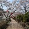 ソロツー 桜と団子の画像