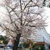 春宵感懐の画像