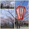 田野町 二十三士公園の桜の画像