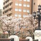 桜満開 エムズグレイシー② 可愛いバッグ 乳がん 旅行 温泉湯着 温泉タオルン 猫 湯あみんの記事より