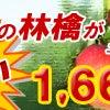 家庭用りんごが安い!!青森県産りんごの画像