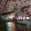 夜桜も見たかったのでの画像