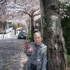 衣笠山の桜散策 of 三番館1階の画像