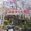 衣笠山のさくら祭りの画像