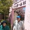 衣笠山の桜散策 of 二番館2階の画像