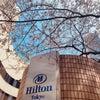 ヒルトン東京の桜の画像