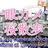 桜を一眼レフカメラG9PRO撮影。天王寺の桜の画像