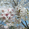 京都植物園の画像