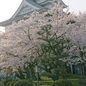 滋賀県、長浜城の画像