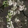 4月の各種カラー養成講座のお知らせ♪の画像