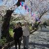 桜散策 of 二番館3階の画像