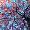 ハートを開くピンクの季節の画像