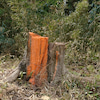 オレンジ色のやつの画像