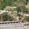 美しき姥桜の画像