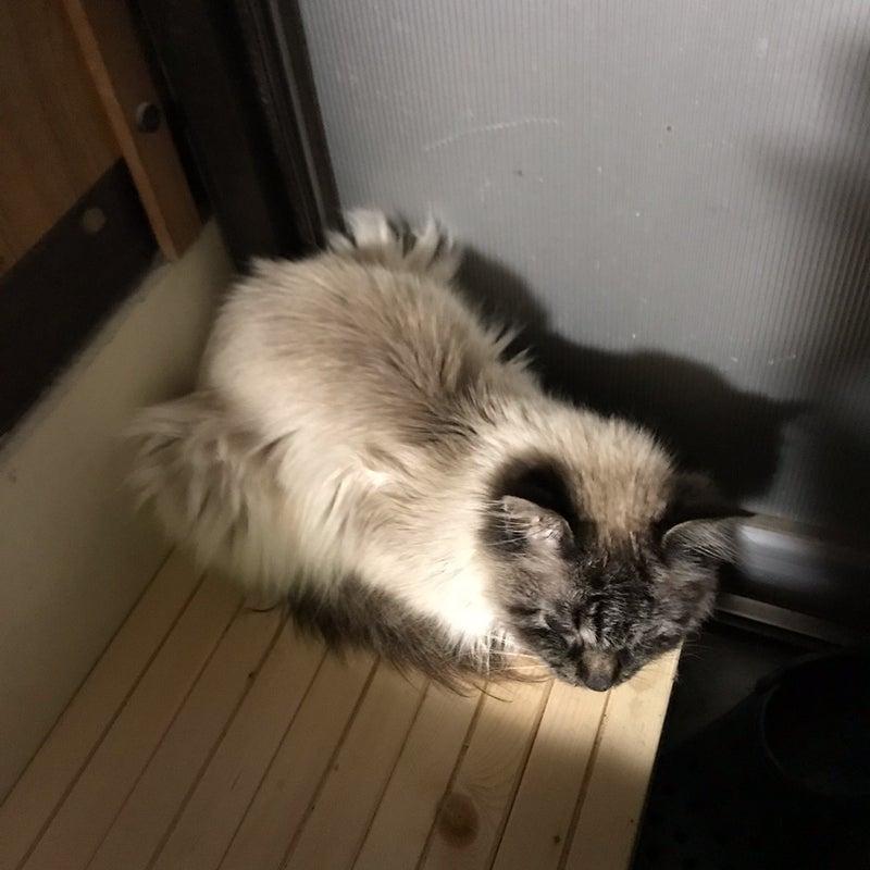 ステージ 猫 腎臓 病