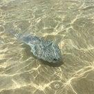 イルカに、亀にマンボウ?に遭遇の記事より
