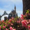 Disney MAGIC☆BLOG