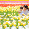 春のチューリップロケフォト