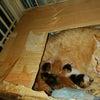 やっと産まれた仔猫! その2の画像