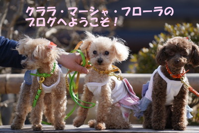 かわいい二匹が物件案内♪日光、鬼怒川の不動産、栄晃産業株式会社☆