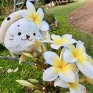 ハワイリボンレイ☆充実したハワイを過ごしました!の記事より