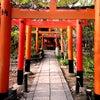 平野神社のサクラの画像