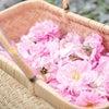 お股から放たれるバラの香りに、至福を感じるひととき・・・の画像