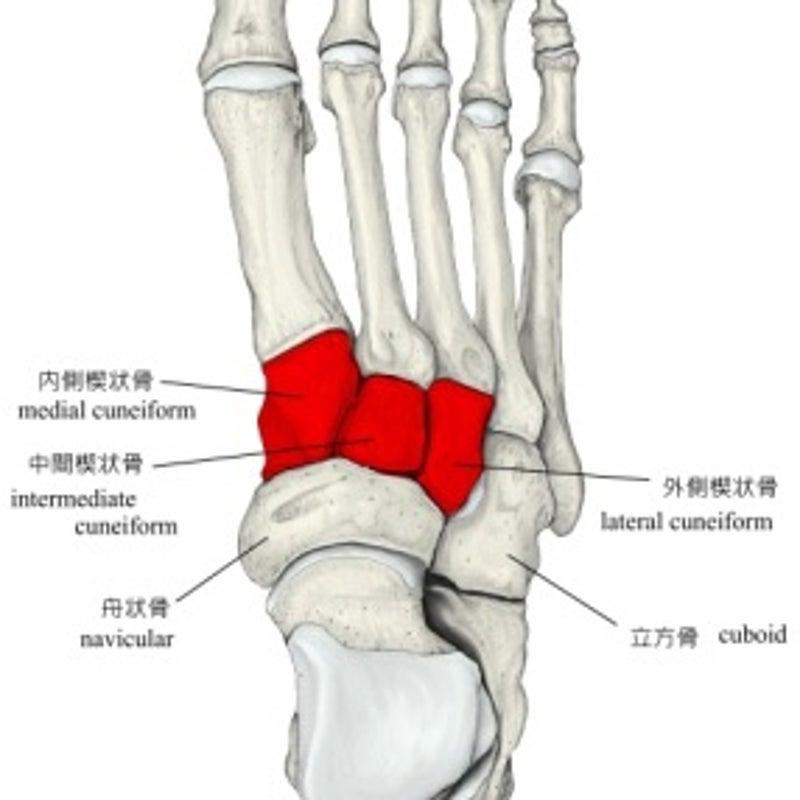 脱臼 骨折 関節 リスフラン
