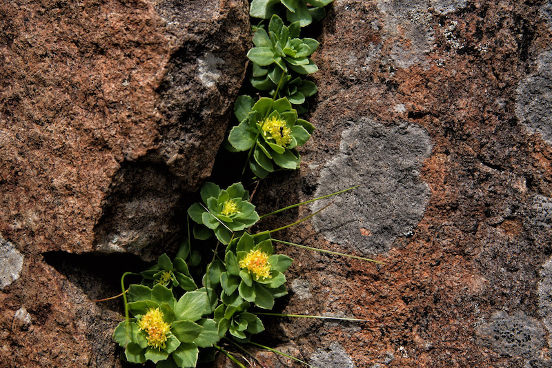 中 花 泥 に 咲く
