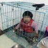 ▼唸声中国写真/ケージの中の女児、虐待???の画像