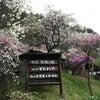 花桃の里の画像