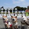ハクくんともも香ちゃんと横浜で!です!の画像